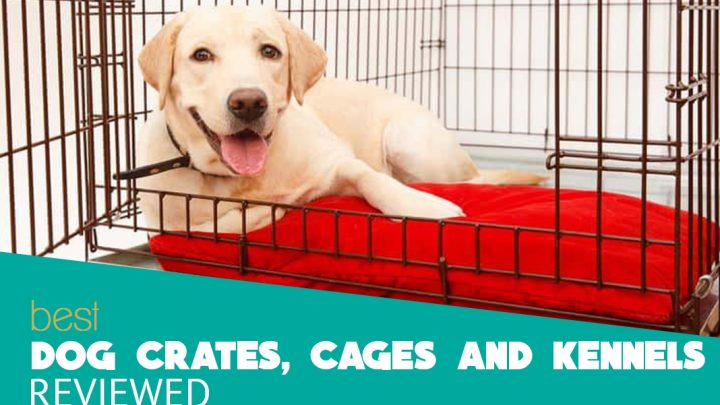 What is a kennel and its use